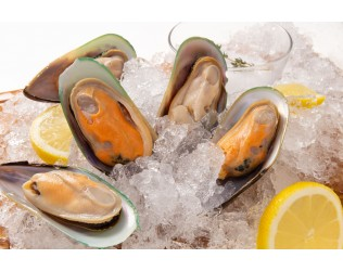 Frozen Half Shell Green Mussel