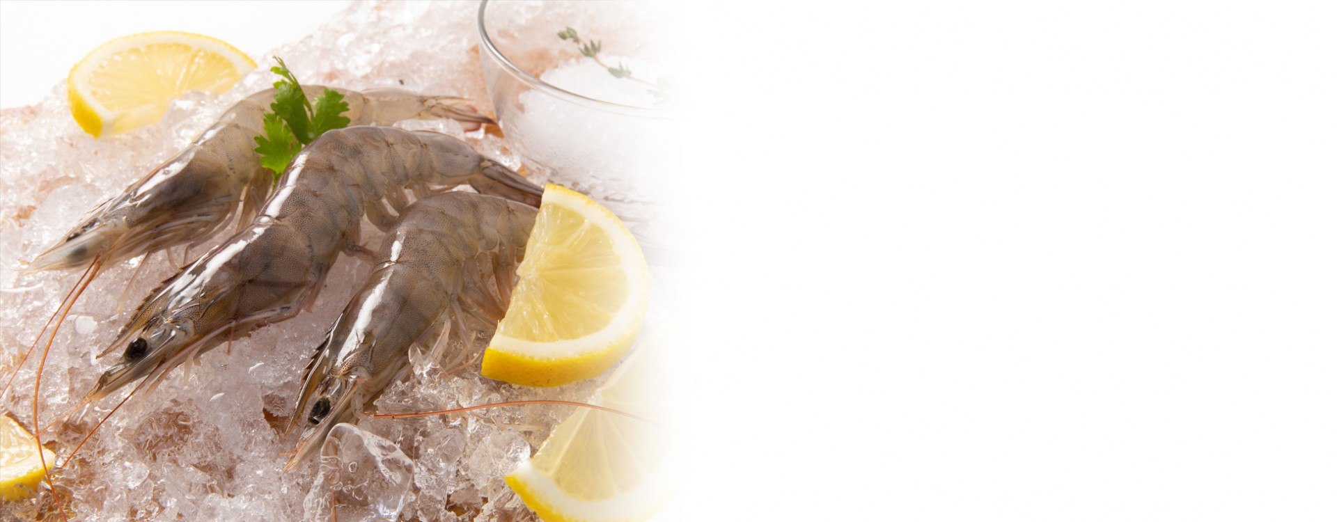 Frozen & Fresh Seafood